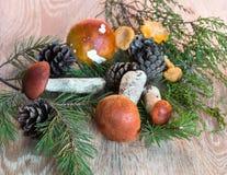 橙色杯子在木背景的牛肝菌蕈类蘑菇 图库摄影
