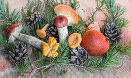 橙色杯子在木背景的牛肝菌蕈类蘑菇 免版税图库摄影