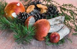 橙色杯子在木背景的牛肝菌蕈类蘑菇 库存照片