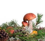 橙色杯子在白色背景隔绝的牛肝菌蕈类蘑菇 图库摄影