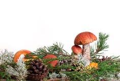 橙色杯子在白色背景隔绝的牛肝菌蕈类蘑菇 免版税图库摄影