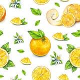 橙色果子成熟与绿色叶子 画开花的河结构树水彩绕的银行 手工 热带的果子 健康的食物 设计的无缝的模式 免版税库存图片