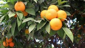 橙色果子 股票录像