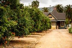 橙色树丛和农厂房子 库存照片