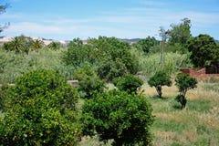橙色树丛, Silves,葡萄牙 免版税库存图片