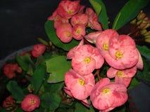 橙色桃红色花 图库摄影