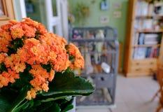 橙色植物的特写镜头视图,看与一个鸟笼和书架在背景中 图库摄影
