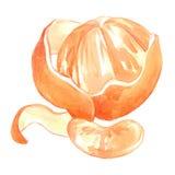 橙色水彩例证 免版税库存照片