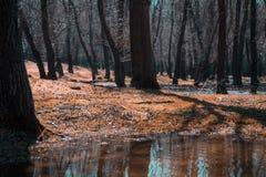 橙色沼地 一棵没有代表的草 魔术世界 树用水充斥 库存照片