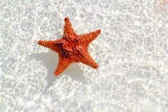 橙色浅海星浇灌波浪 免版税库存照片
