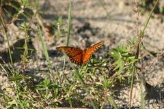 橙色海湾贝母蝴蝶 免版税库存图片
