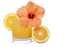 橙色热带 库存照片
