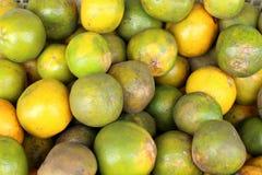 橙色热带 库存图片