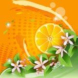橙色片式 向量例证