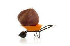 橙色独轮车(微型)用在它的一颗榛子 免版税库存照片