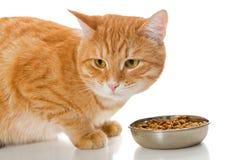 橙色猫和烘干饲料 免版税库存图片