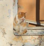 橙色猫在一个老房子的窗口里坐一个晴天 库存照片