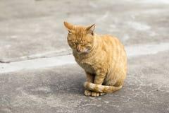 橙色猫 免版税库存图片
