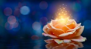 橙色玫瑰点燃漂浮蓝色背景情人节的Bokeh 免版税库存照片
