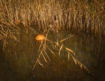 橙色球在秋天公园池塘  图库摄影