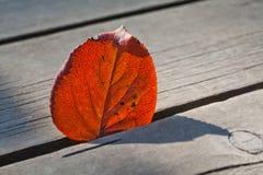 橙色白杨木叶子特写镜头、纹理和剪影 木背景 软绵绵地集中 库存照片
