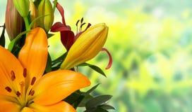 橙色百合花花束 免版税库存照片