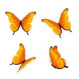 橙色的蝴蝶 向量例证