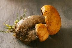 橙色盖帽牛肝菌蕈类蘑菇 库存照片