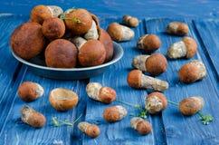 橙色盖帽牛肝菌蕈类蘑菇(白杨木蘑菇) 免版税库存图片