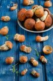 橙色盖帽牛肝菌蕈类蘑菇(白杨木蘑菇) 库存照片
