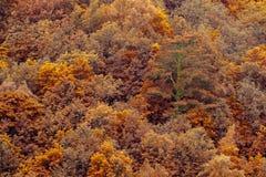 橙色秋天林木纹理背景 苹果覆盖花横向草甸本质星期日结构树 库存照片
