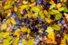 橙色秋天森林照片用叶子和水 库存图片