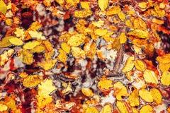 橙色秋天森林照片用叶子和水 库存照片