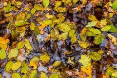 橙色秋天森林照片用叶子和水 图库摄影