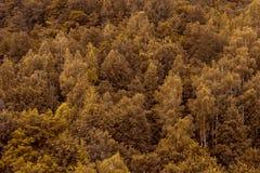 橙色秋天秋天林木纹理背景 苹果覆盖花横向草甸本质星期日结构树 免版税图库摄影