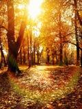 橙色秋天美丽的太阳火光 免版税库存图片