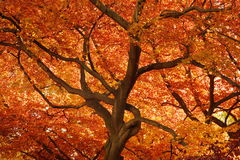 橙色秋天 库存图片
