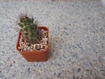 橙色罐的一点仙人掌植物在石背景 免版税库存图片