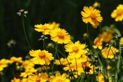 橙色美丽的花 库存图片