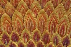 橙色羽毛灰泥纹理 库存图片