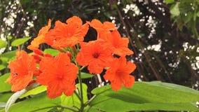 橙色花五颜六色与蜂飞行 库存照片