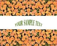橙色花卉边界 库存图片