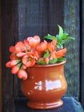 橙色花小花束的垂直的图片  免版税库存图片