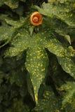橙色花按钮 免版税库存图片