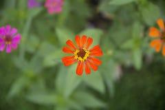 橙色花有迷离背景 免版税图库摄影