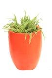 橙色花架 库存照片