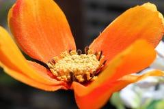 橙色花 库存图片