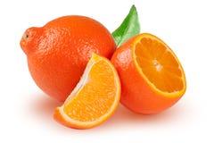 橙色蜜桔或Mineola与半在白色背景隔绝的切片和叶子 免版税图库摄影