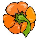 橙色辣椒粉、甜椒或者甜保加利亚胡椒顶视图 背景查出的白色 现实和乱画 免版税库存照片