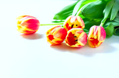 橙色郁金香和猫小猫爱心脏在白色背景的华伦泰浪漫史 免版税库存照片